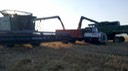 2012 Wheat Harvest